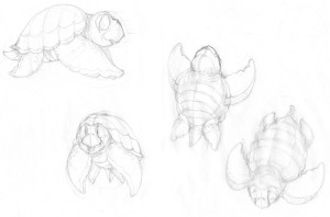 turtle_character_blog